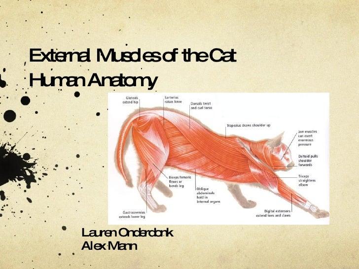 Human anatomy cat project alex and lauren