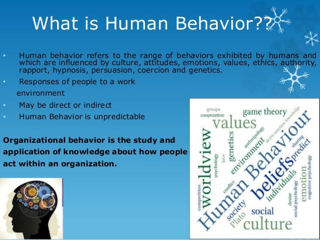 human behavior in organizations creativity in workplace Creativity is the development of novel, useful ideas in any human activity   analyze, and support creative behavior in organizations in a wide variety of  industries (not  and the advertising firm inventing a system for managing  creative work.