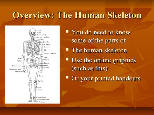 an overview of the human evolution in the biology Overview: evolutionary theory provides a powerful framework for investigating  why humans are the way we are human evolutionary biologists seek to.