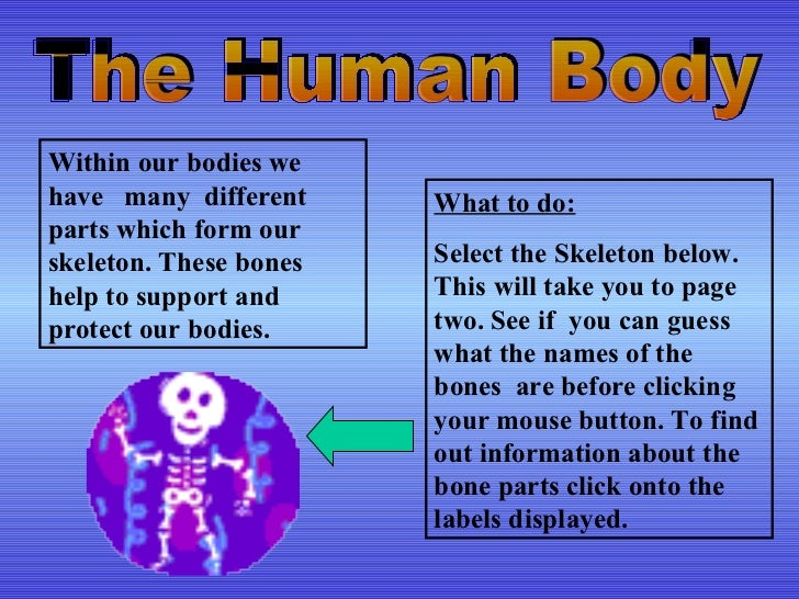 The Human Body Within our bodies we have  many  different parts which form our skeleton. These bones help to support and p...
