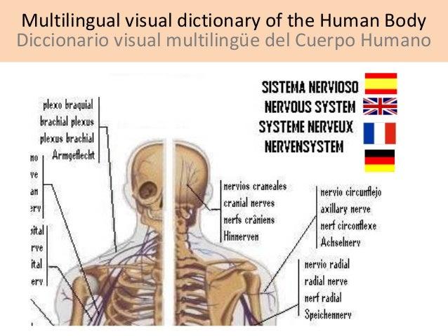 Multilingual visual dictionary of the Human Body Diccionario visual multilingüe del Cuerpo Humano