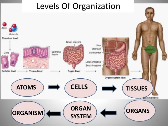 Human organism picture