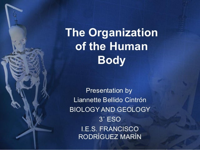The Organization of the Human Body Presentation by Liannette Bellido Cintrón BIOLOGY AND GEOLOGY 3˚ ESO I.E.S. FRANCISCO R...