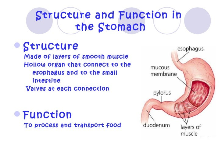 Human Body Structure And Function