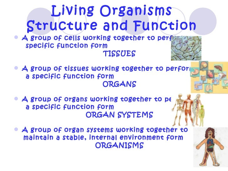 the function and relationship between body systems The human body systems system function diagram major organs  interactions- working with other systems digestive 1 take in food (ingestion.