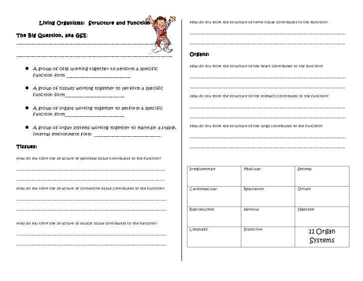 Human body structure and function worksheet – Cell Function Worksheet