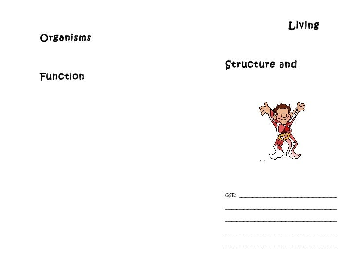 Human body structure and function worksheet