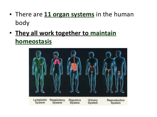 an overview of the systems of the human body The human body is made up of several organ systems that work as one unit the major organ systems of the body work together, either directly or indirectly, to keep.