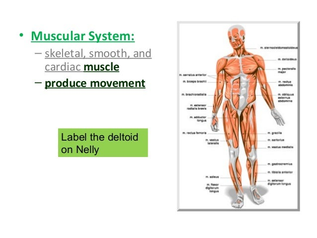 Human Body Systems General Overview
