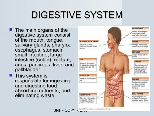 Function Of Each Organ In The Digestive System Awesome Projects Best ...