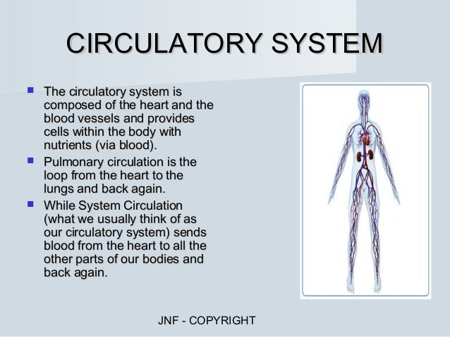 Organ Systems And Functions Chart Organ Systems Concept Map ...