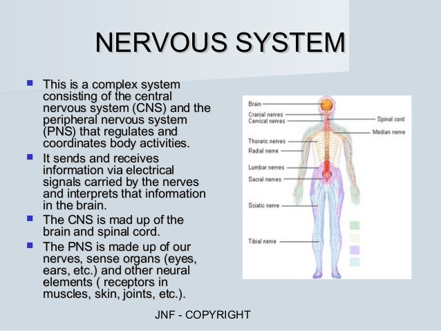 human body systems & functions, Human body