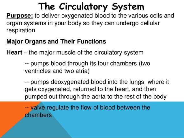 Human bodysystems powerpoint 2013 image of the respiratory system 12 ccuart Gallery