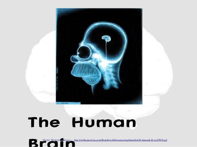 The Human Master Watermark Image:   http://williamcalvin.com/BrainForAllSeasons/img/bonoboLH-humanLH-viaTWD.gif