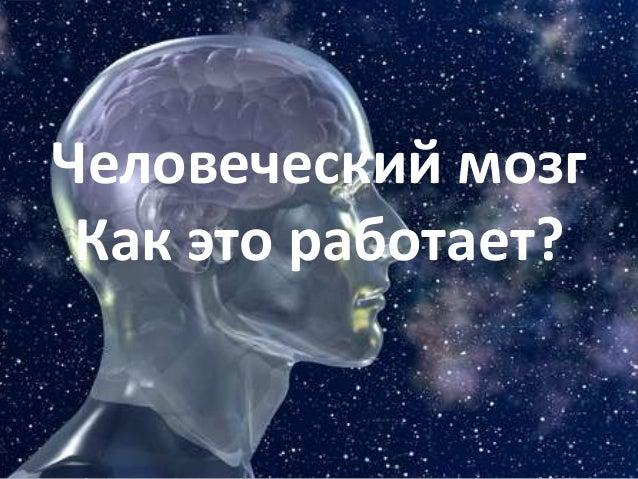 Человеческий мозг Как это работает?