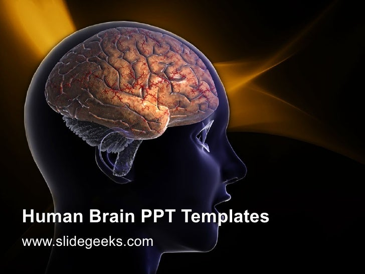 Human brain ppt templates