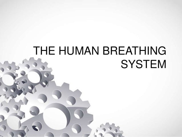 THE HUMAN BREATHING SYSTEM
