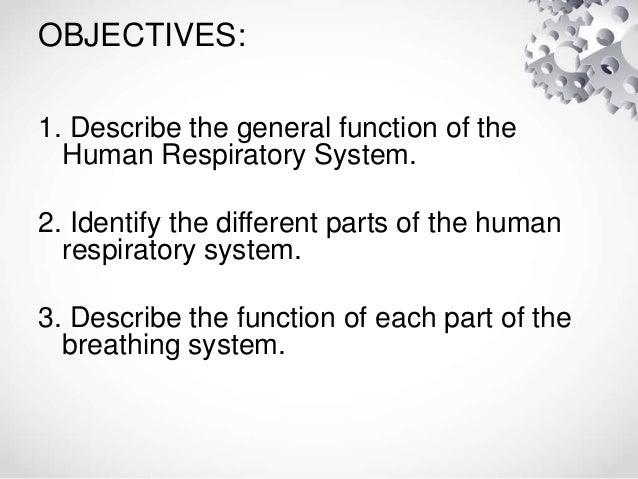Human breathing system Slide 2