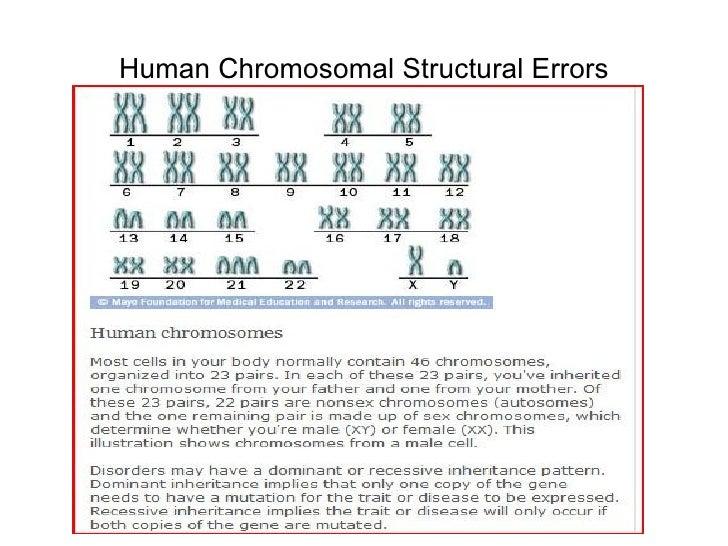 Human Chromosomal Structural Errors