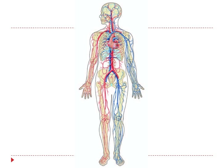 Diagram of the circulatory system without labels auto wiring human circulatory system rh slideshare net human body circulatory system diagram human body circulatory system diagram ccuart Gallery
