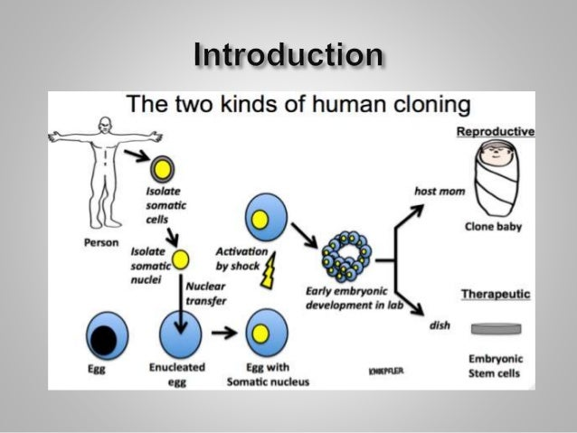 the legal aspects of human cloning and federal funds prohibition The human cloning prohibition act outlaws the process known as somatic cell  nuclear  the situation is likely to be quite different where ethical issues are  concerned  by the us house of representatives is not limited to use of  public funds  a federal law was passed, with no real controversy, prohibiting  the sale and.