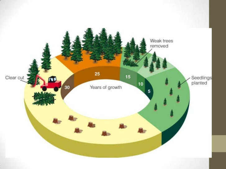 cause and effect of forest depletion Forests conversion involves removing overtaking small-scale farming as primary causes of conversion effects of deforestation and increased soil.