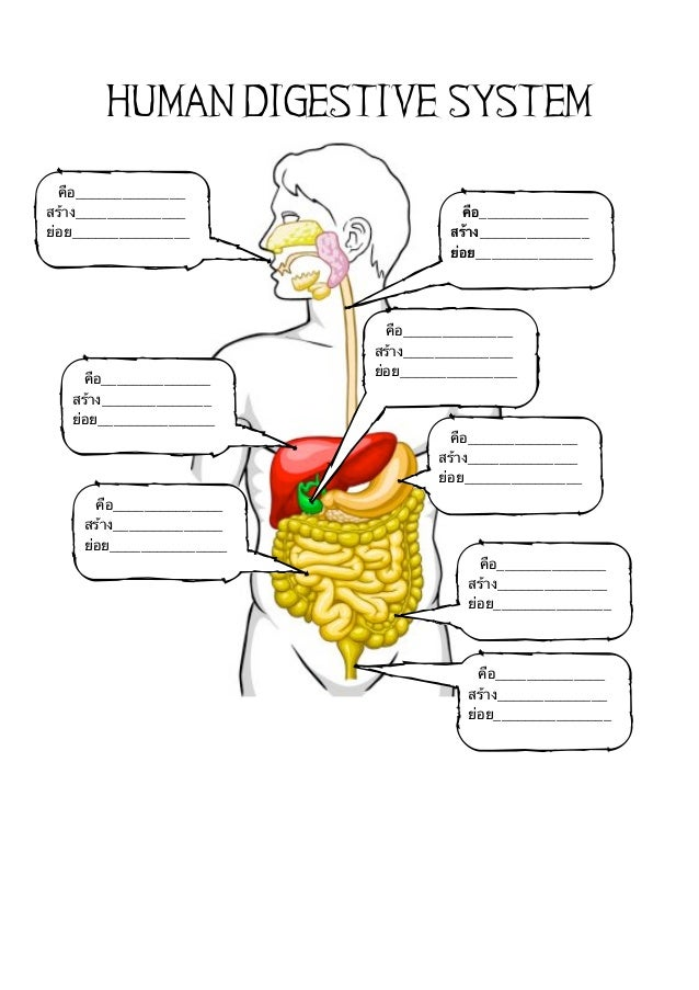human digestion coursework Human digestive system  our aim is to help you get a + grades on your coursework we handle assignments in a multiplicity of subject areas including admission.