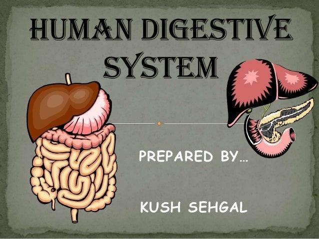PREPARED BY…KUSH SEHGAL