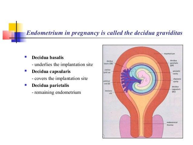 Human Embryology Ii