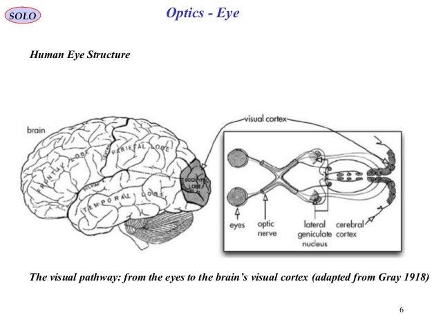 Human eye optics