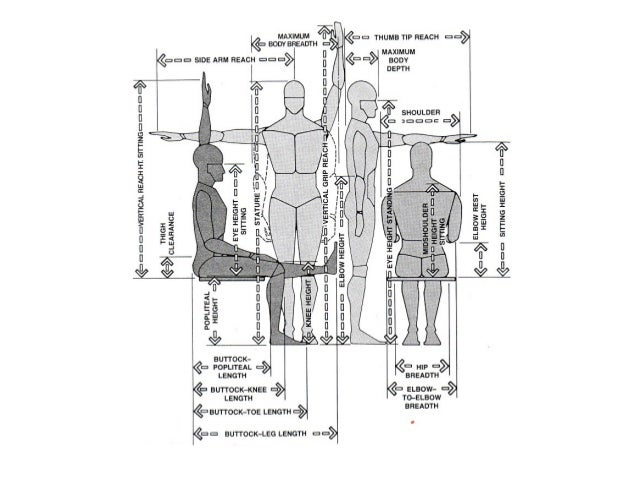 ergonomics and 95th percentile Ergonomics involves the study of people and their relationship with the environment around them it often involves research into the way people interact with.