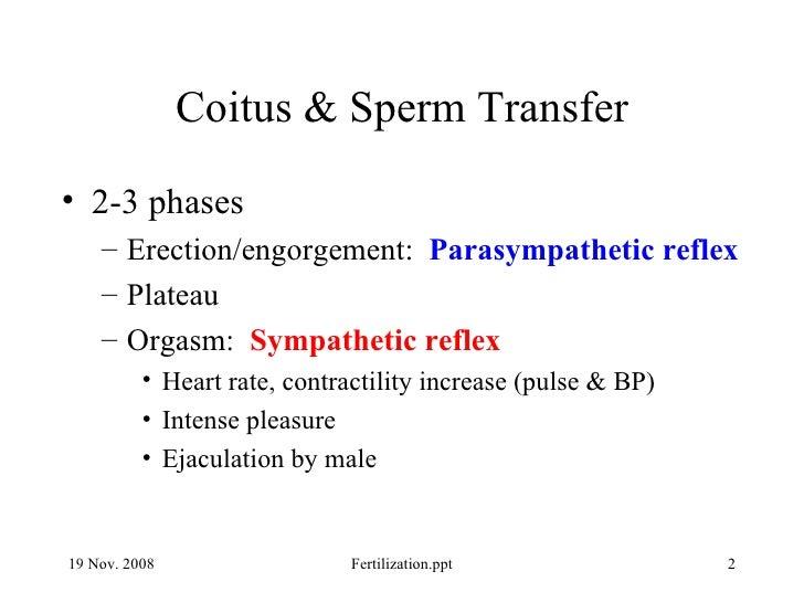 Human fertilization Slide 2