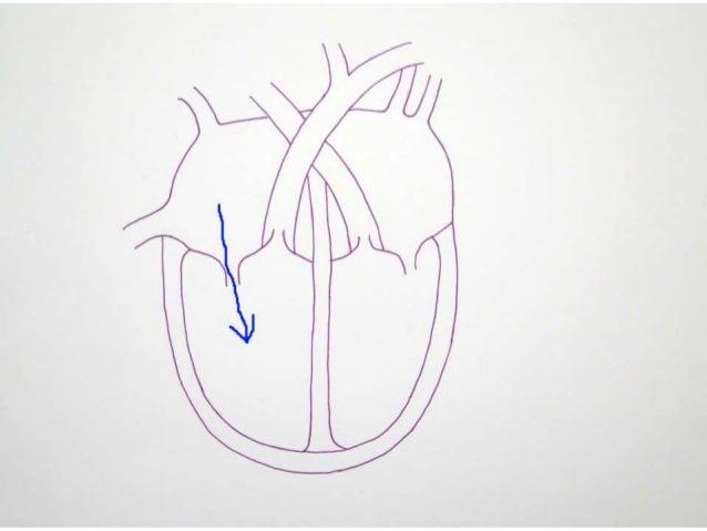 Reptile Heart Diagram - House Wiring Diagram Symbols •