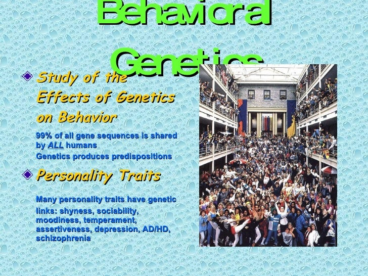 Behavioral Genetics <ul><li>Study of the Effects of Genetics on Behavior </li></ul><ul><li>99% of all gene sequences is sh...
