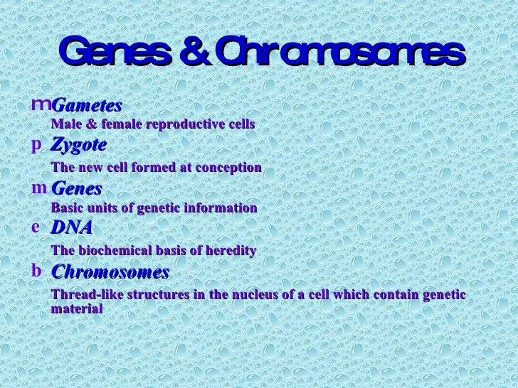 Genes & Chromosomes <ul><li>Gametes </li></ul><ul><li>Male & female reproductive cells </li></ul><ul><li>Zygote </li></ul>...