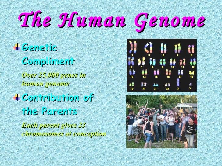 The Human Genome <ul><li>Genetic Compliment </li></ul><ul><li>Over 25,000 genes in human gename </li></ul><ul><li>Contribu...