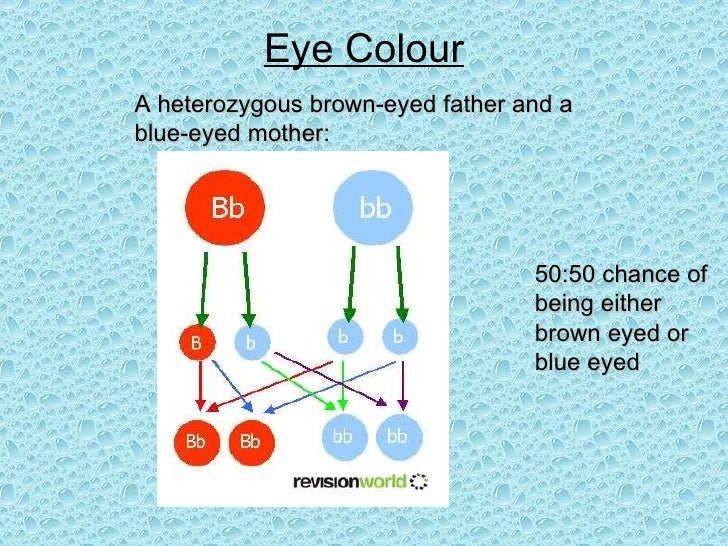 Eye Colour A heterozygous brown-eyed father and a blue-eyed mother: 50:50 chance of being either brown eyed or blue eyed