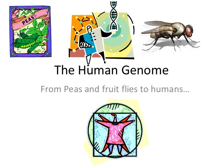 The Human GenomeFrom Peas and fruit flies to humans…