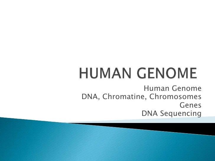 Human GenomeDNA, Chromatine, Chromosomes                       Genes              DNA Sequencing