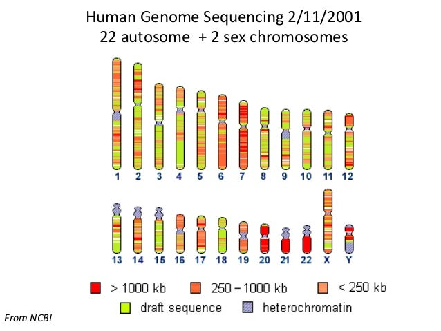 human genome The proportion of guanine (g) or cytosine (c) nucleotide bases in the human genome is approximately 40.