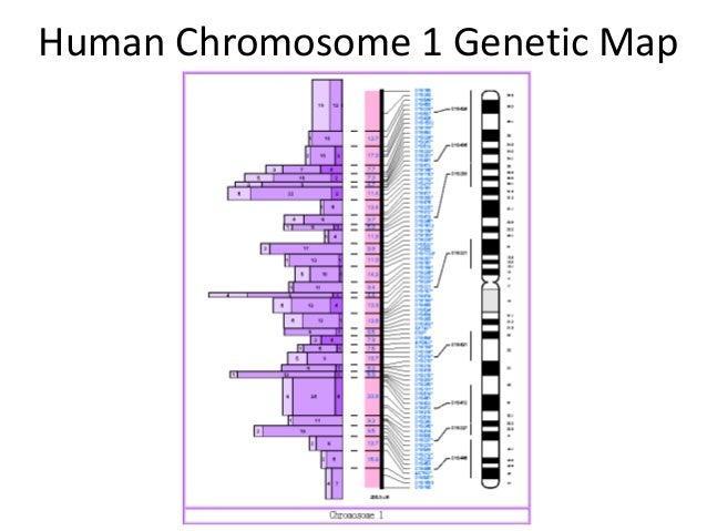 an overview of the purpose and development of the human genome project So the human genome project was first proposed in the late 1980s  as well as technology development  its entire purpose for.