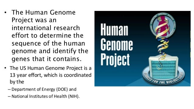 the international effort on human genome project The human genome project table of contents (the international human genome sequencing consortium) the effort could be well worth it, many.