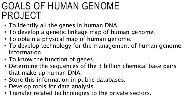 decoding the human chromosome The data seemed to yield some evidence for the involvement of genes on every chromosome in the human genome many of these changes seemed to confer only small effects but scientists began to believe that many cases of autism might be due to the buildup of many common genetic mutations that together caused asd in an individual.