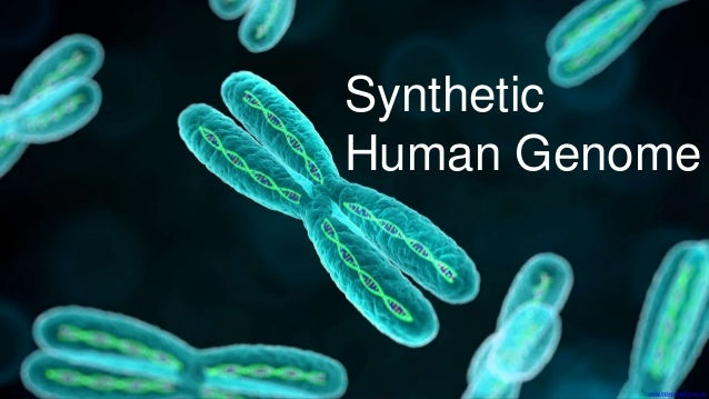 the importance of the human genome project The human genome project is impacting upon clinical genetics by defining the  complexity of genes in humans, by developing technology at 'genome‐wide'.