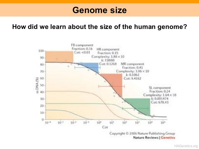 the genome project The human genome project (hgp), which operated from 1990 to 2003, provided researchers with basic information about the sequences of the three billion chemical base pairs (ie, adenine [a], thymine [t], guanine [g], and cytosine [c]) that make up human genomic dna (deoxyribonucleic acid.