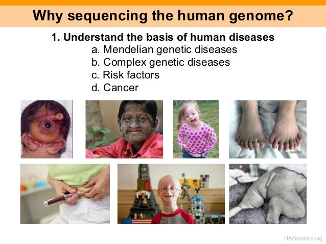 the importance of the human genome project The human genome project (hgp) was a project for a complete sequencing of the genome united states led the project a group of 32 scientists of 14 countries, mainly us, united kingdom, france and japan, founded the human genome organization (hugo), a coordinating organization of the hgp.