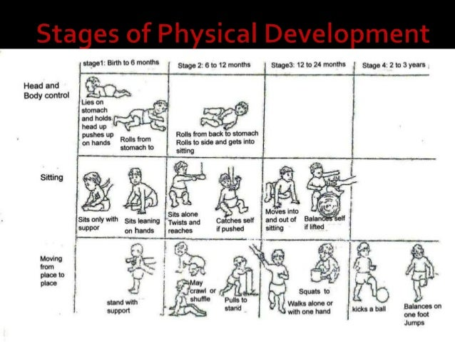 human growth & development: developmental psychology. by theresa lowr…, Muscles