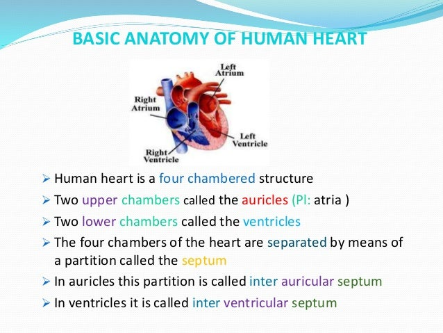 Human heart anatomy and physiology Part -1
