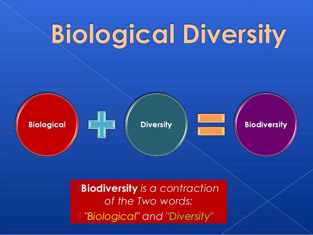human impact on biodiversity essay An argumentative essay - free download as word doc (doc), pdf file (pdf), text file (txt) or read online for free.
