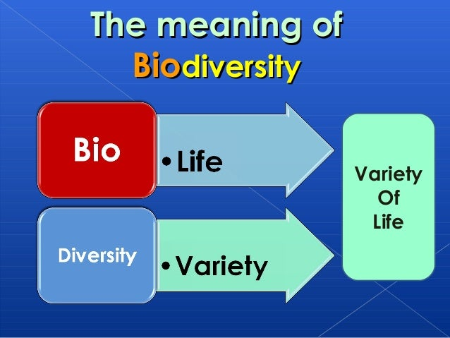 human impact on biodiversity essay Plastic waste: ecological and human health impacts  the impacts of plastic waste on our health and the environment are only just becoming apparent most of our.